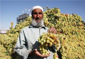 انگور افغانستان